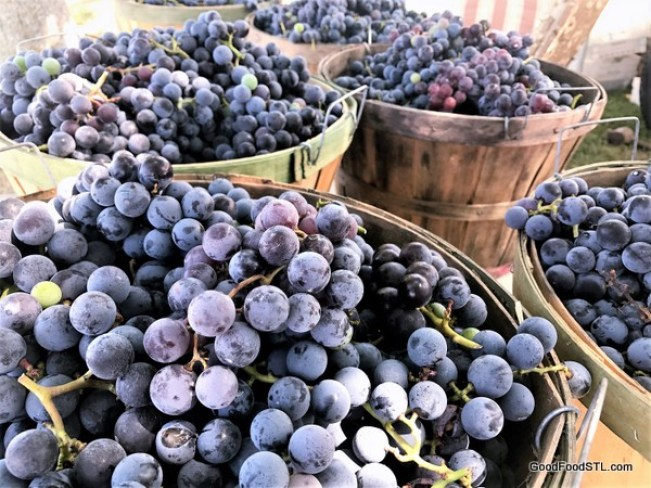 Concord grapes from Rosati vineyards