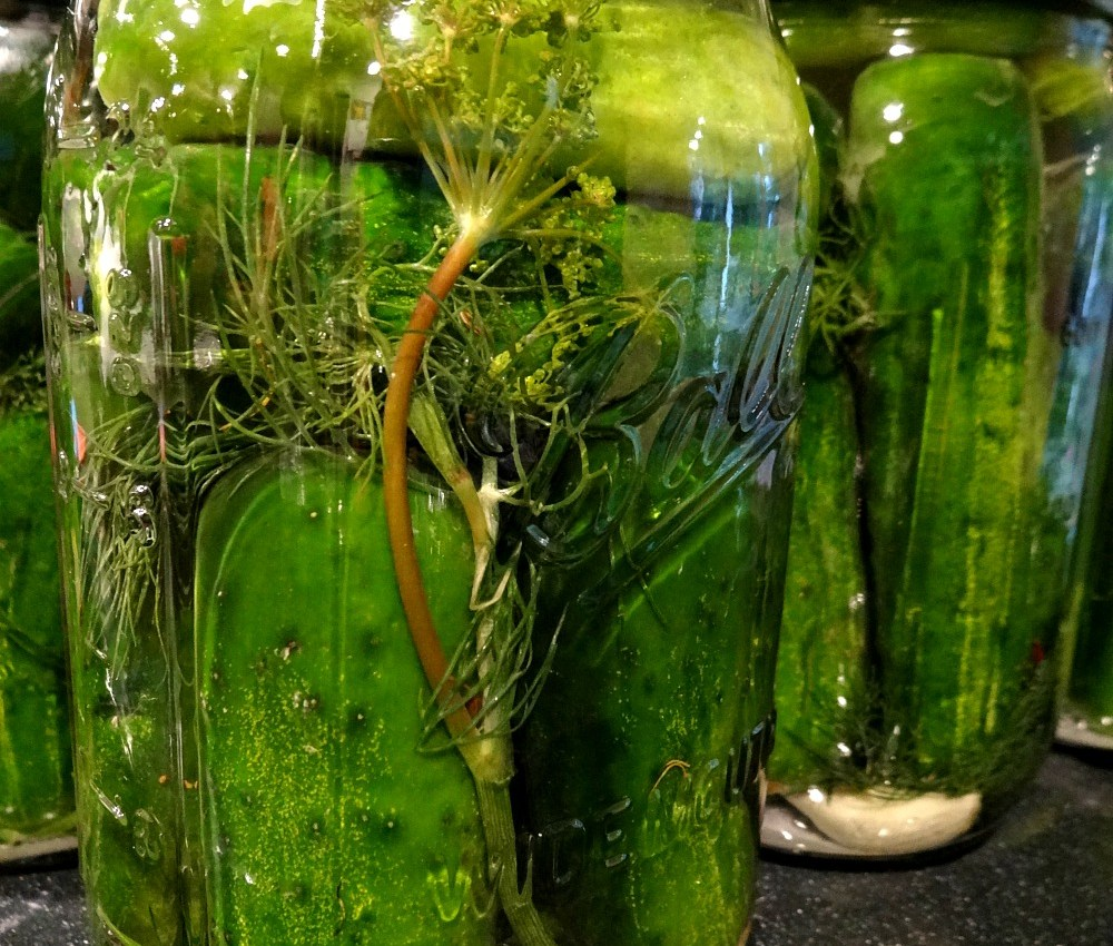 Pickle jar sealed and ready to go