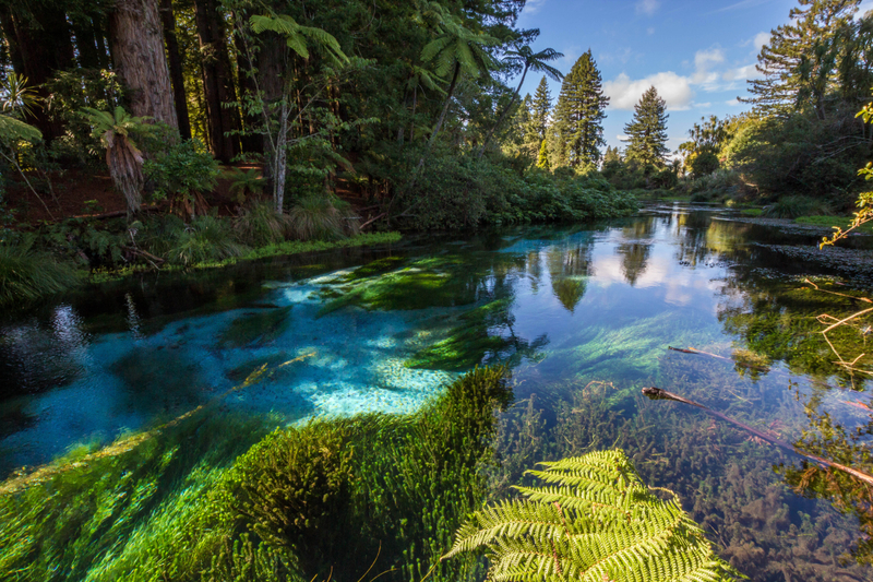 River Scenic And Landscape In New Zealand Image Free