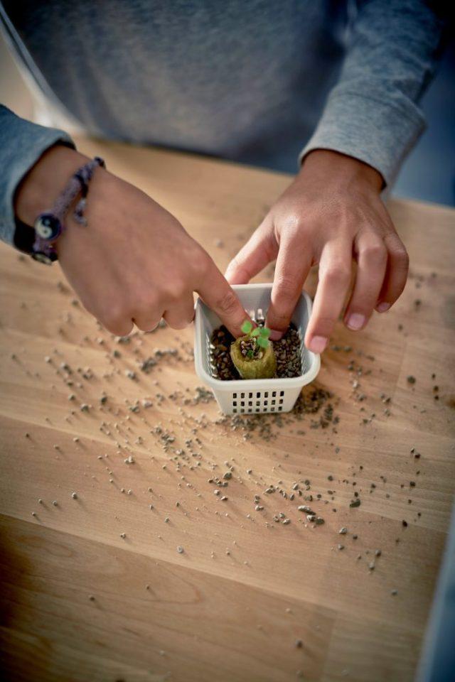 IKEA hydrocultuur kweeksets- het hele jaar door groentes kweken-GoodGirlsCompany