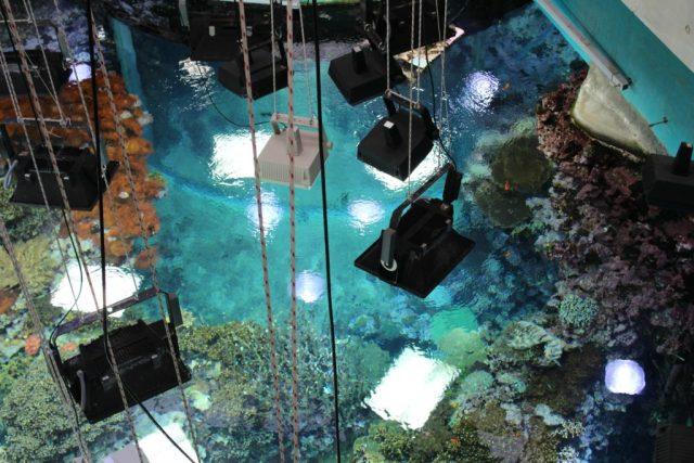 Kijkje achter de schermen -Deep Ocean Monsters VLOG-GoodGirlsCompany-Burgers Zoo musical