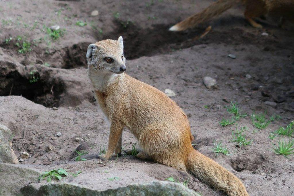 Tierpark-Nordhorn-vosmangoests-GoodGirlsCompany