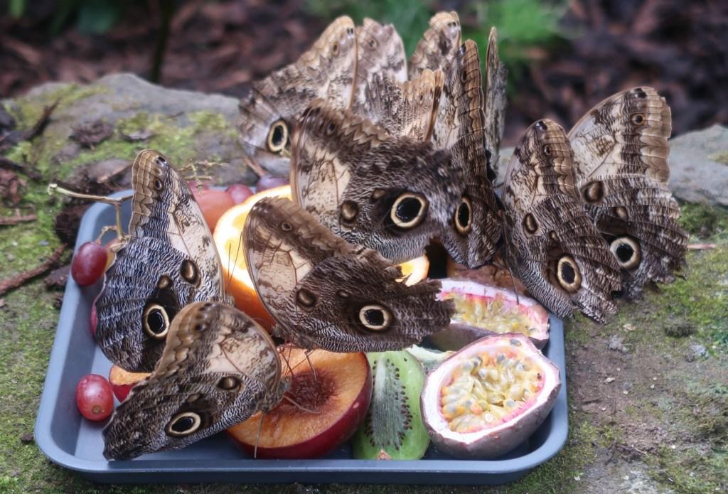 Vlinders kijken in Pili Palas Nature World