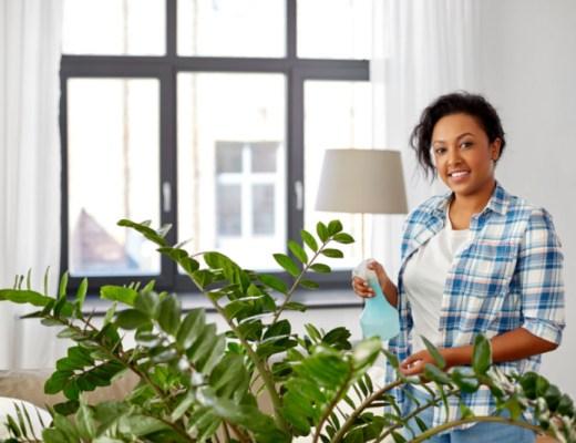Zamioculcas-verzorging-kamerplant-makkelijk