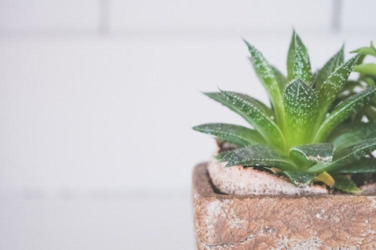 hippe planten voor je woonkamer