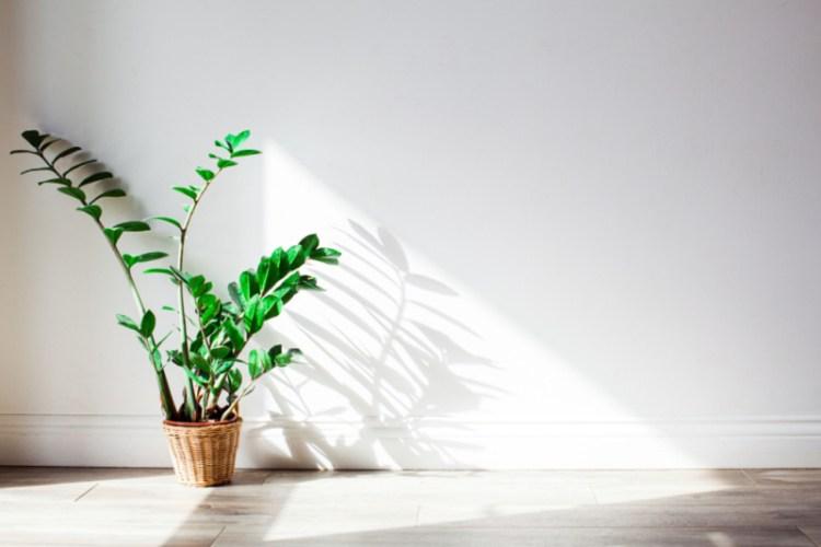 makkelijk te verzorgen luchtzuiverende kamerplanten (1)