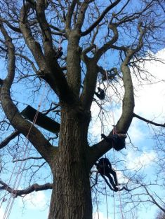 People in the trees!