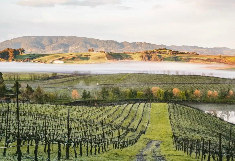 Cline Cellars Petaluma Gap Vineyard