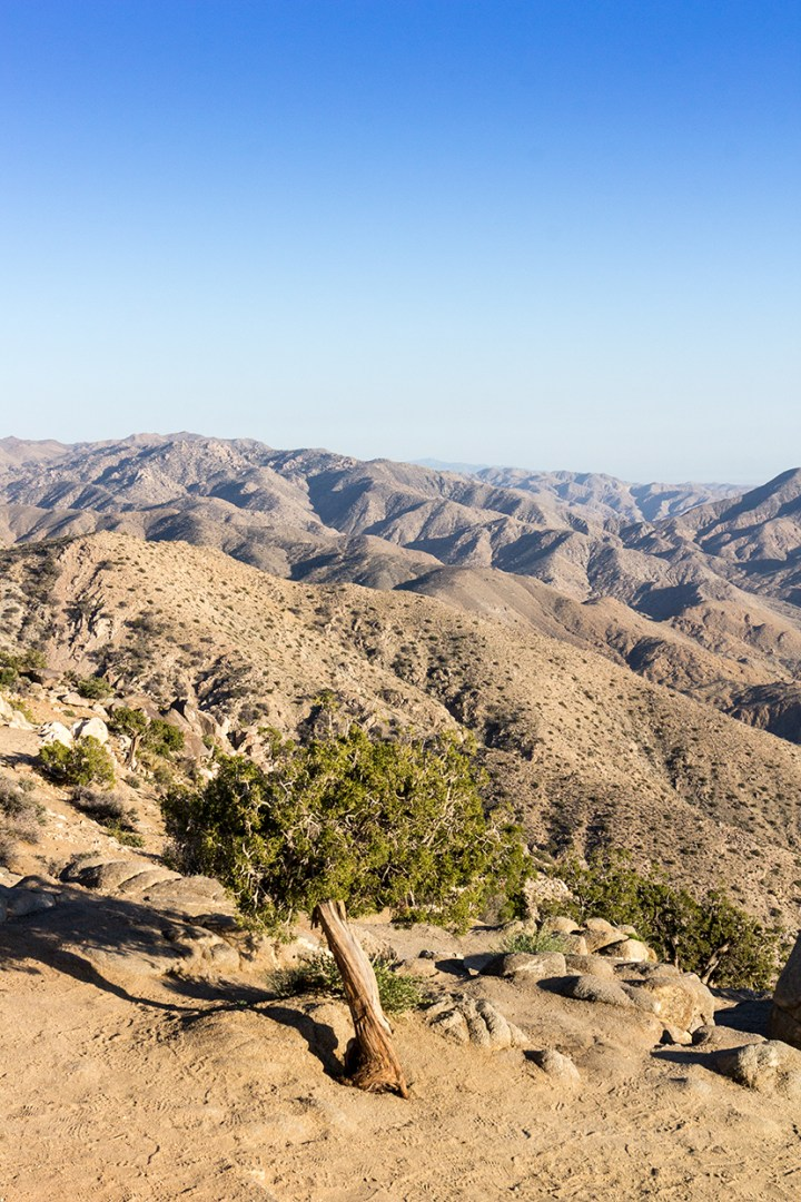 San Bernardino Mountains at Joshua Tree National Park