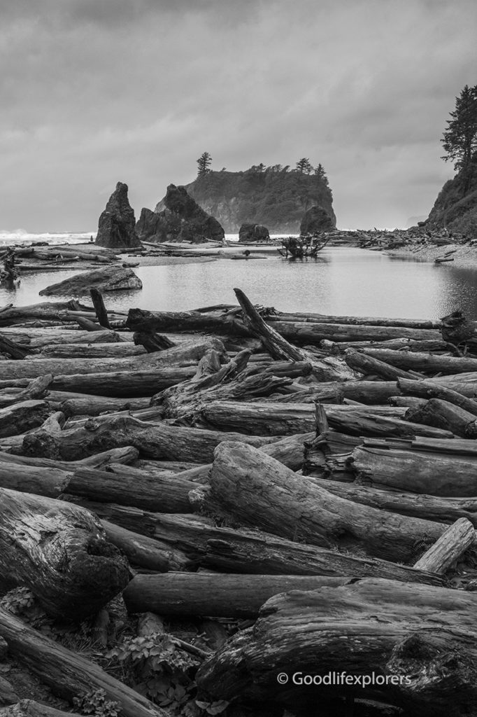 Driftwood on Ruby Beach in Olympic National Park