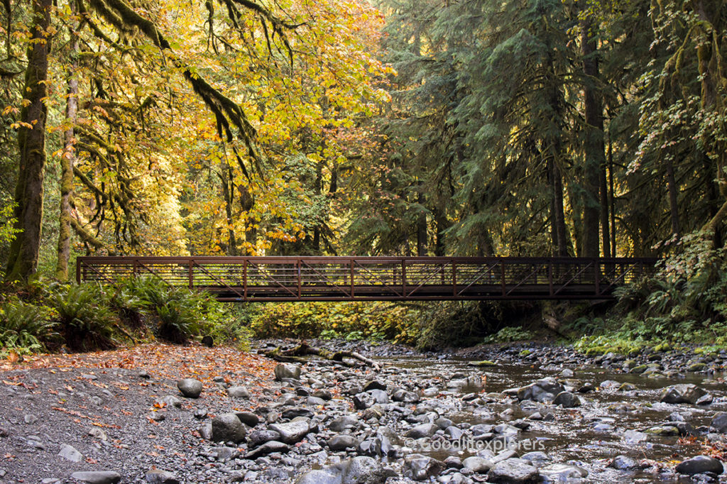 Marymere Falls trail during fall in Olympic National Park