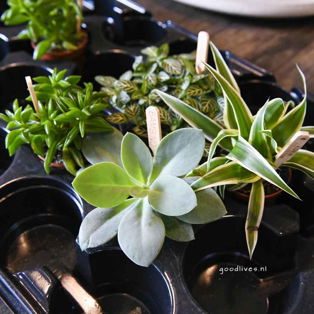 De plantjes - DIY moederdagcadeau 2018