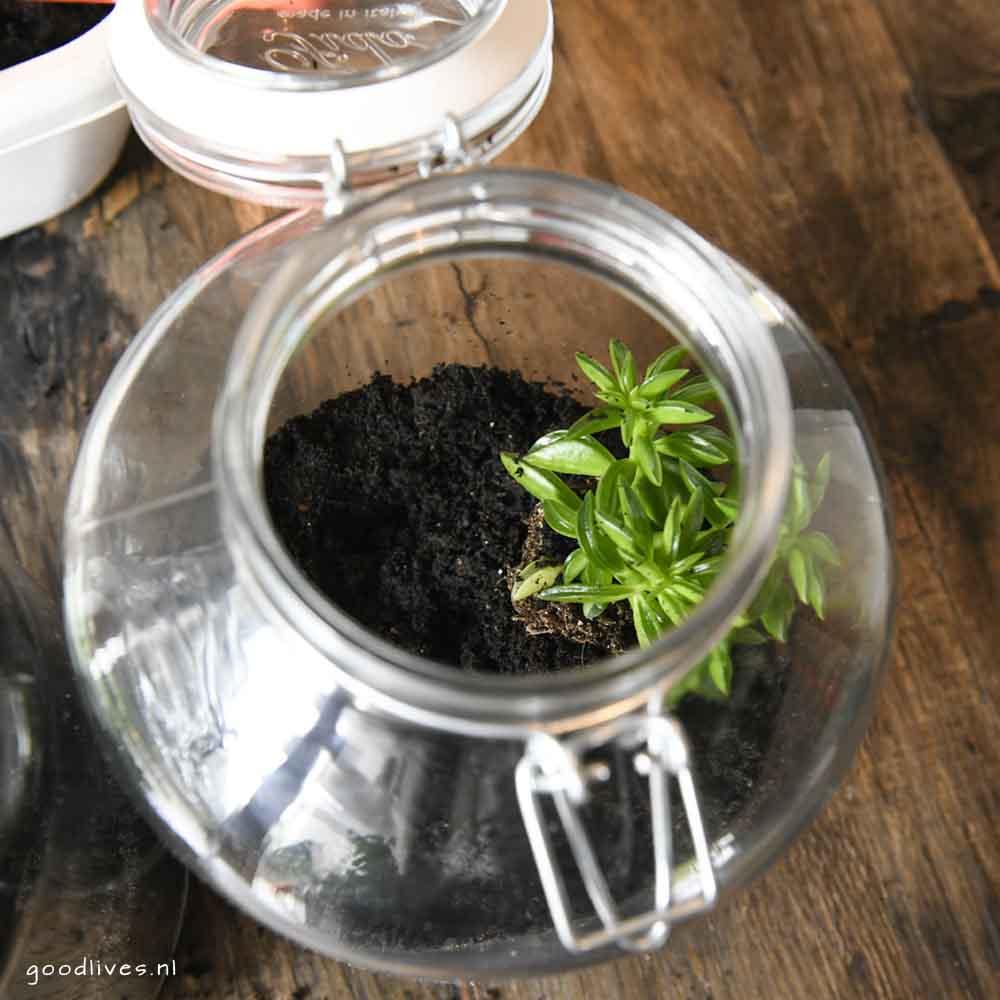 Eerste plantje in de pot - DIY moederag cadeau 2018
