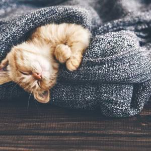 pandemic-impacting-sleep-health