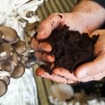 PDJ 20 Novembre : UpCycle – La boîte à champignons