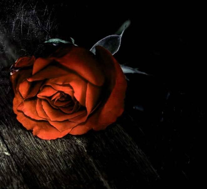 Best Flower For ProFile 1