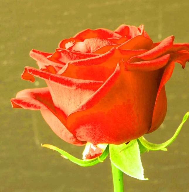 Flower For ProFile Pics Hd