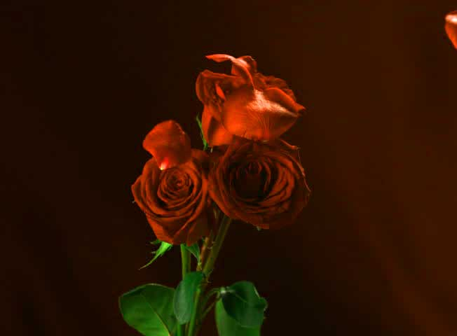 Flower Images For ProFile Images Hd