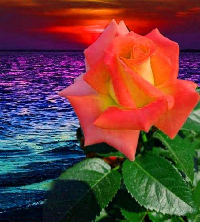 Flower Images For ProFile Pics Free