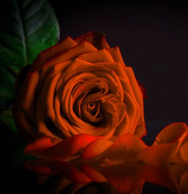 Flower Images For ProFile Wallpaper
