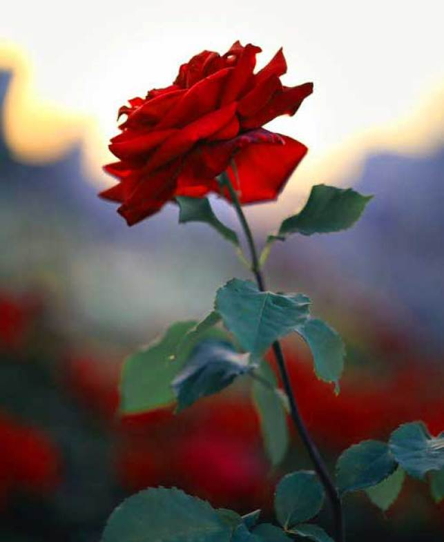 Nice Flower For ProFile Wallpaper Images