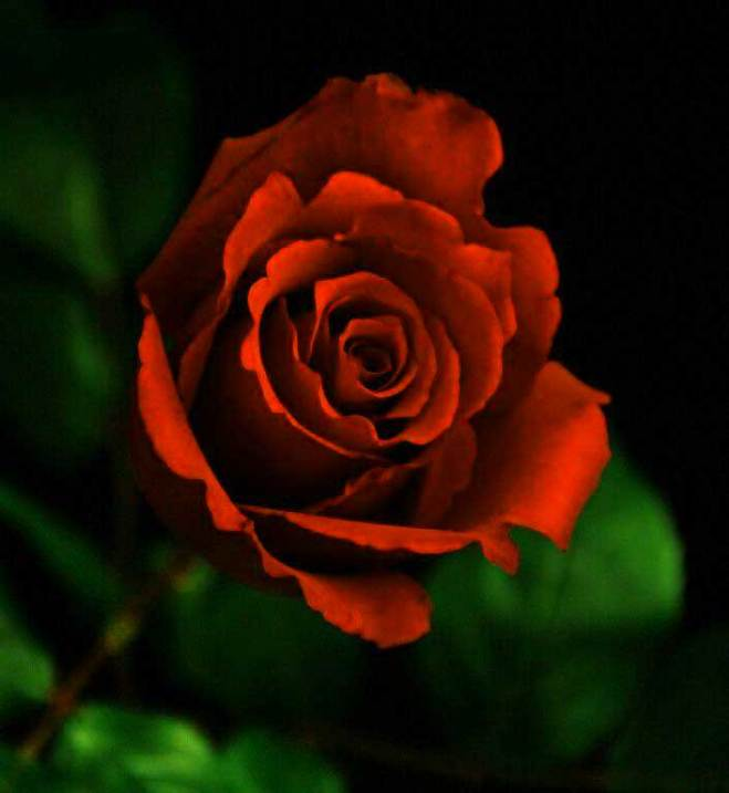 Top Flower For ProFile Pics Free