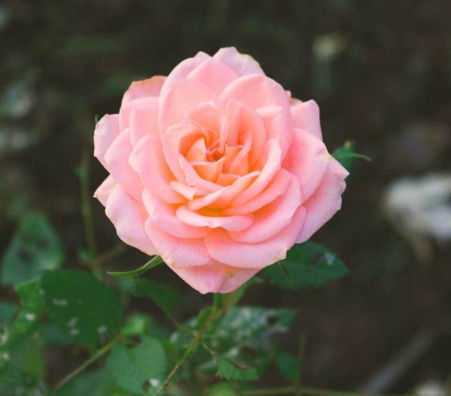 atest Flower For ProFile Pics Photo