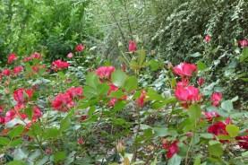 Flowers along the path on the Viaduc des Arts