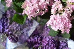 Adriane M - pink and purple hydrangeas