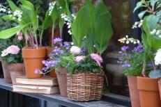 Flowers Paris - Lily of the valley rue des Saints Peres
