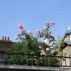Butte aux Cailles - A flowered terrace Passage Barrault