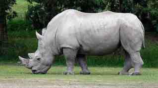 Image result for extinct species