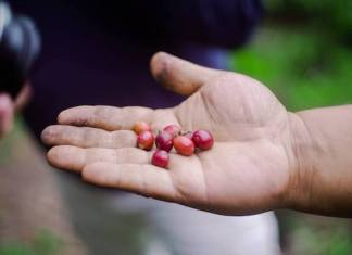 SGD Coffee