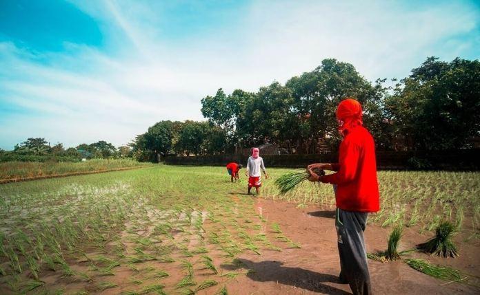 Pinoy farming Cropital