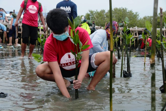 Manila Bay mangrove rehabilitation