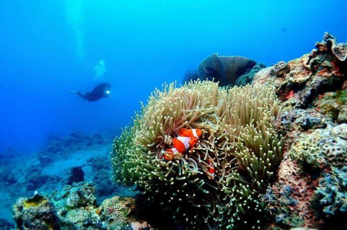 Batangas dive spots reopen