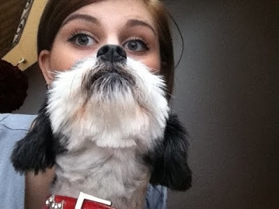 dog look funny image