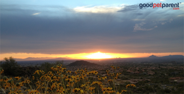 Serendipity and a Wildlife Rescue Story feature image - Arizona sunset landscape