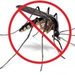 image_post7_no-mosquito