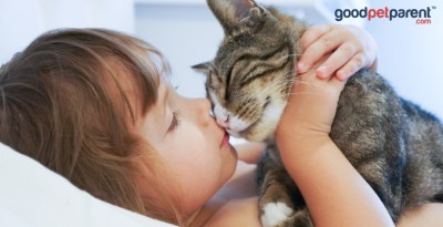 Do animals experience emotion feature image - child is kissing a cat