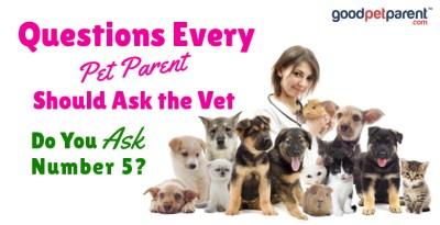 Questions Every Pet Parent Should Ask the Vet