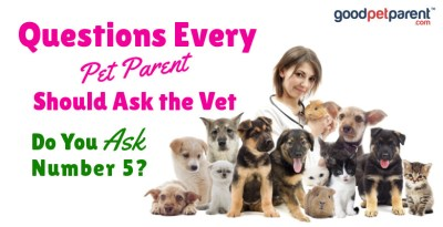 Good Pet Parent: Questions Every Pet Parent Should Ask the Vet