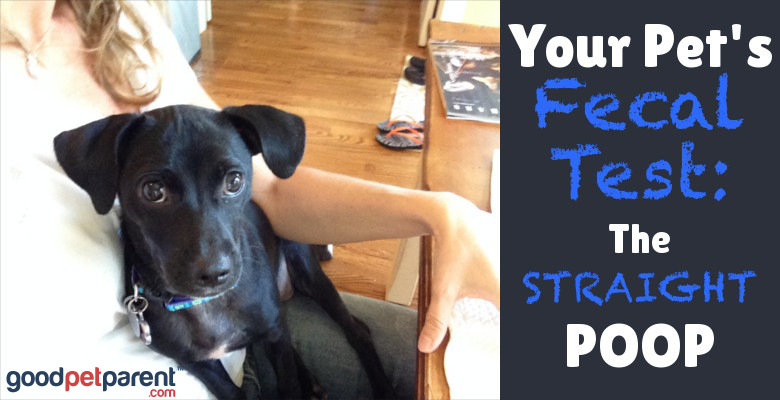 Your Pet's Fecal Test: The Straight Poop