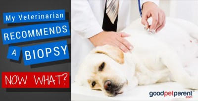 My Veterinarian Recommends a Biopsy – Now What?