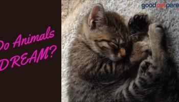 Can Pets Suffer from PTSD? - Good Pet Parent