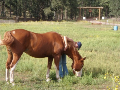 What I Learned About Trust From a Formerly Abused Horse