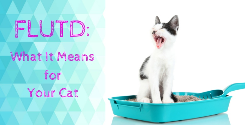 FLUTD_what-it-means-for-your-cat feature image
