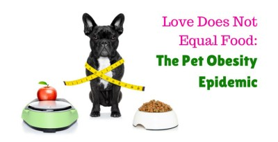 pet obesity epidemic bulldog beside scale