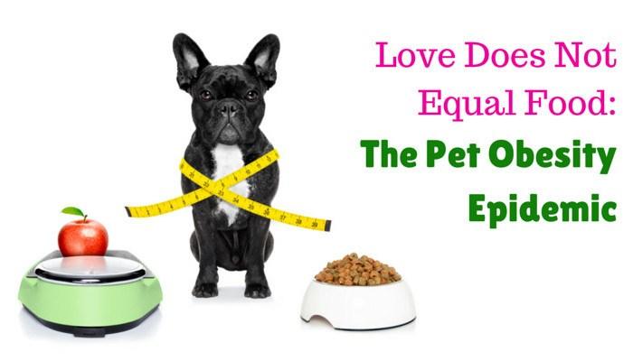 pet obesity epidemic bulldog beside scale