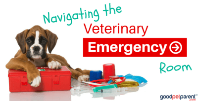 Feature Image Navigating the Veterinary Emergency Room ER